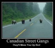 Canuck Gangs